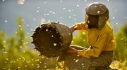 """""""Kraina miodu"""": O ludziach, pszczołach i harmonii"""