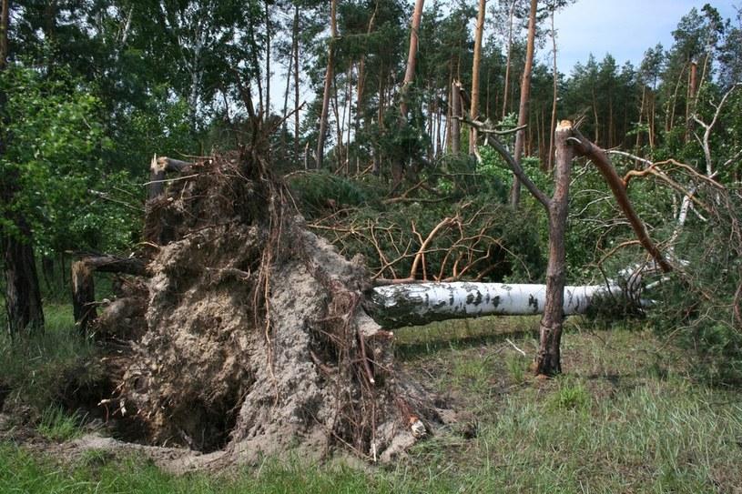 Krajobraz po przejściu nawałnicy /fot. /Andrzej Bonarski /East News