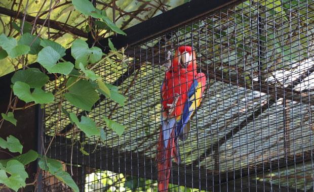 Krakowski ogród zoologiczny od środy ponownie otwarty