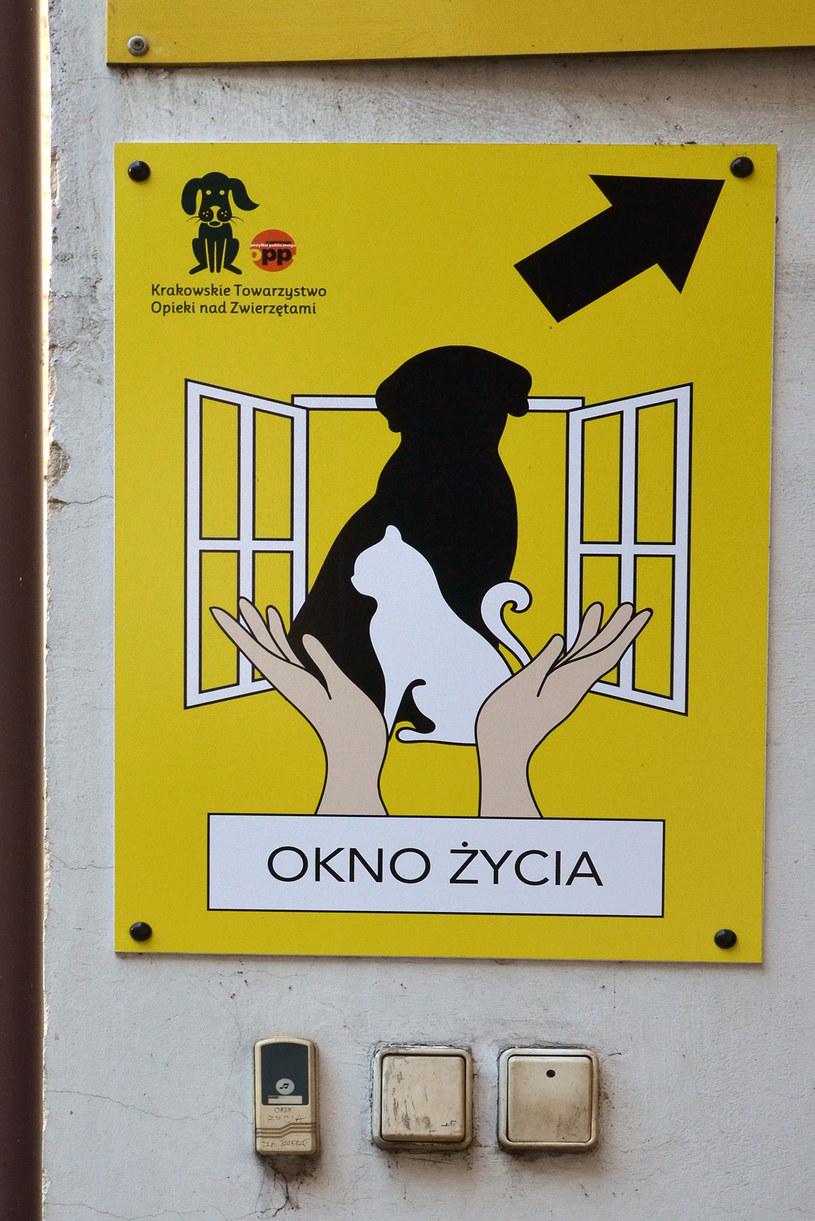 Krakowskie Towarzystwo Opieki nad Zwierzętami /Ewa Majewska /INTERIA.PL