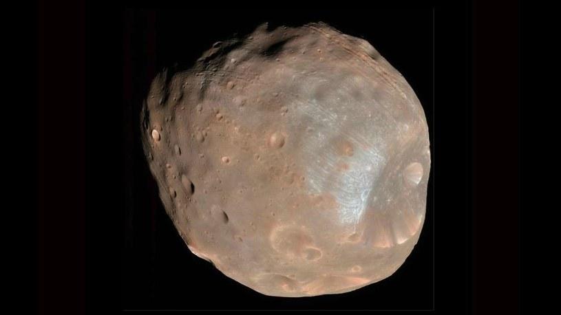 Kratery na Fobosie, większym z marsjańskich księżyców /NASA