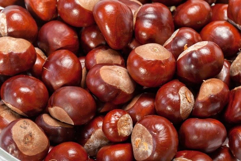 Kremy i balsamy na bazie wyciągu z kasztanowca świetnie sprawdzą się w profilaktyce obrzęków i żylaków /123RF/PICSEL