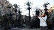 Kreta: Ogień zniszczył gaj palmowy przy plaży Preweli