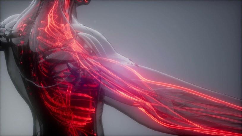 Krew wypełnia cały nasz organizm, więc umożliwia wirusowi rozprzestrzenianie się /123RF/PICSEL