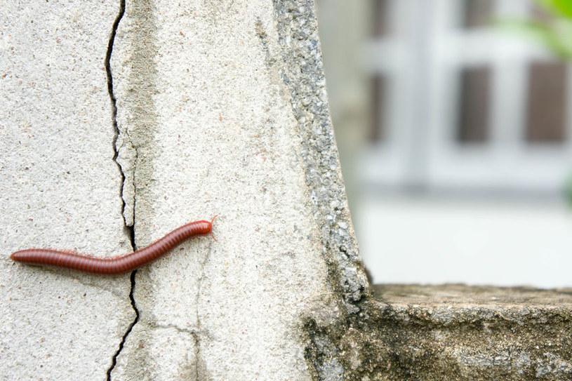Krocionogi wspinają się po ścianach /©123RF/PICSEL