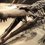 Krokodyl, który zjadał dinozaury