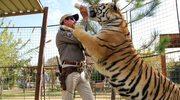 """""""Król tygrysów"""": Niespodziewany sukces"""