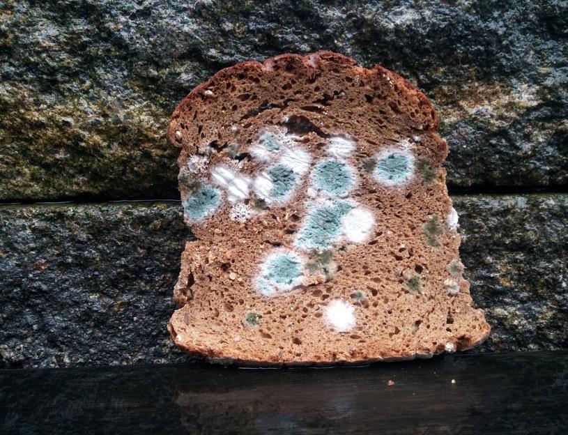 Kromka chleba z pleśniowym nalotem /123RF/PICSEL