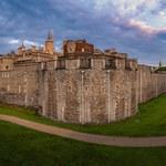Kruki nad Tower. Londyńczycy wybierają imię dla nowego pisklaka