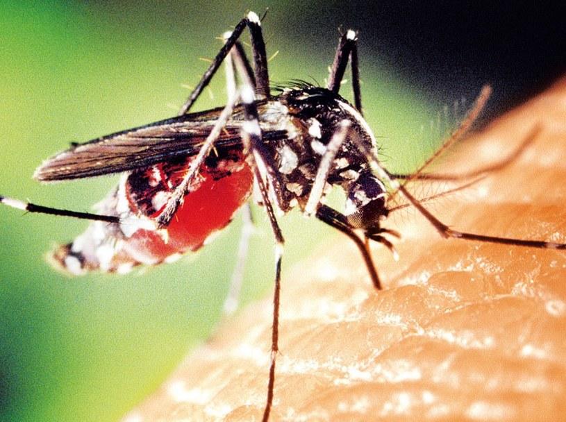 Krwiopijcze komary to nowe zagrożenie dla Europy /21 wiek