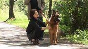 Krzysztof Globisz nawołuje do adopcji psiaków