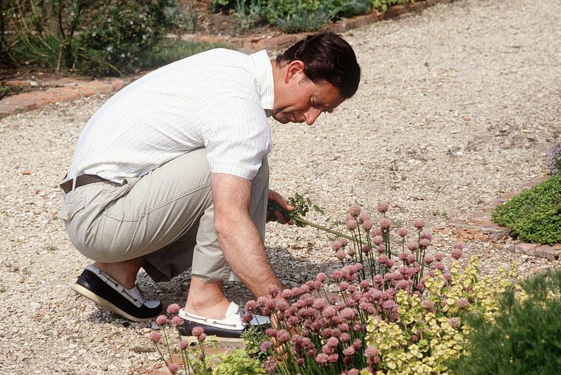 Książę Karol nadzorował projekty ogrodów Highgrove. Sam przesadzał kwiaty / Tim Graham / Contributor /Getty Images
