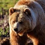 Książę Lichtensteinu na polowaniu. Miał zastrzelić największego niedźwiedzia w Rumunii