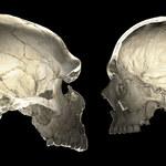 Kształt czaszki mamy po neandertalczykach