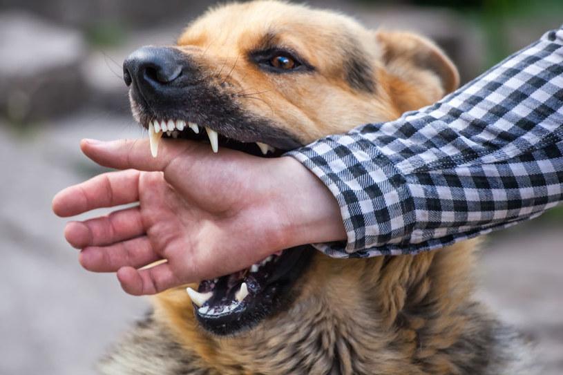 Które rasy psów są niebezpieczne dla dzieci? /©123RF/PICSEL