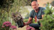 Które rośliny powinny rosnąć w donicach?