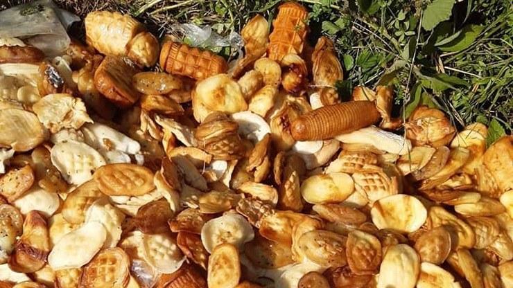 Ktoś wyrzucił stos serów /Lasy Państwowe /materiały prasowe
