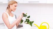 Kuchnia cała w kwiatach