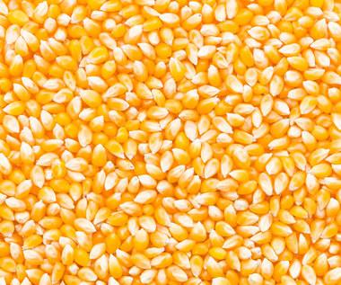 Kukurydza. Dlaczego warto włączyć ją do diety?