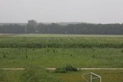 Kukurydziana łamigłówka koło Kielc
