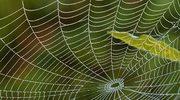 Kuloodporna skóra z pajęczyny