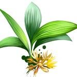 Kurkulina: Zdrowy odpowiednik cukru