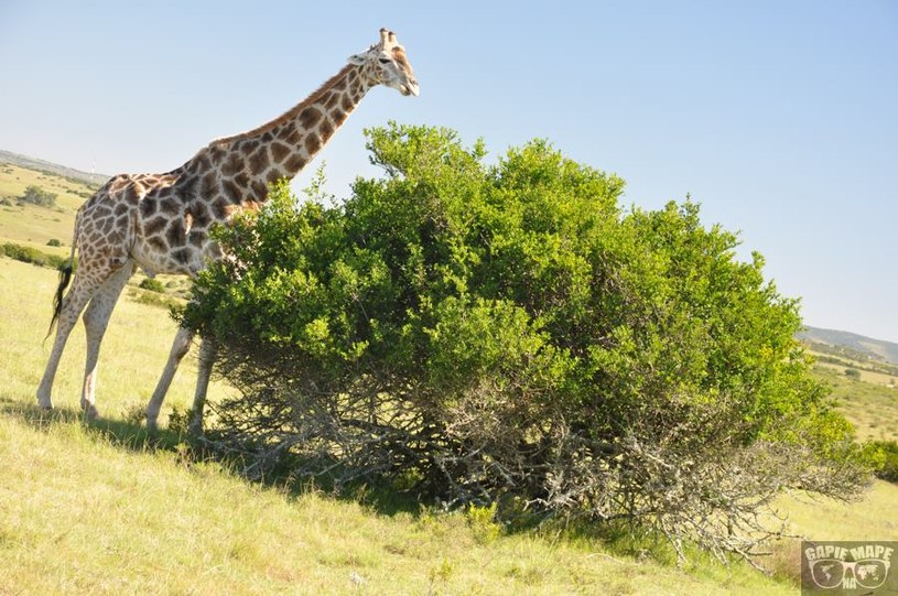 Kwantu Game Reserve, RPA /Informacja prasowa
