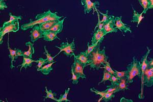 Kwasy tłuszczowe usprawniają działanie mitochondriów