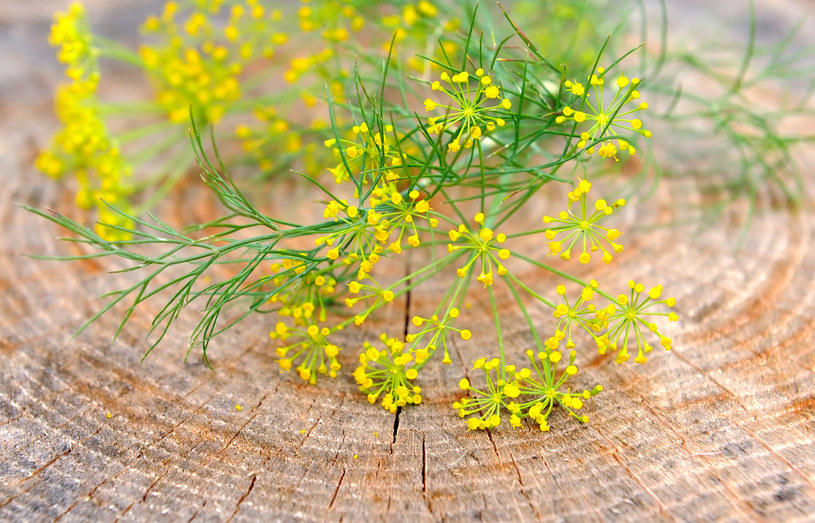 Kwiat kopru /123RF/PICSEL