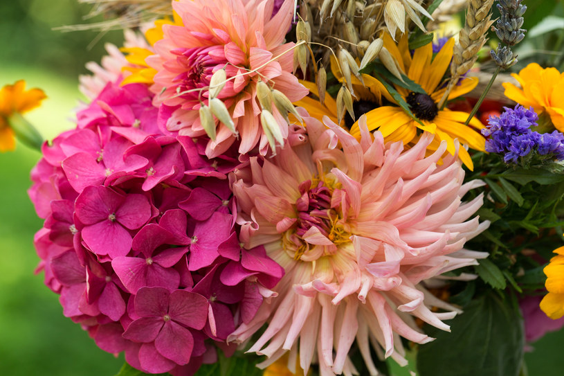 Kwiat to ważny element ziela /123RF/PICSEL