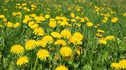 Kwiatki z rabatki