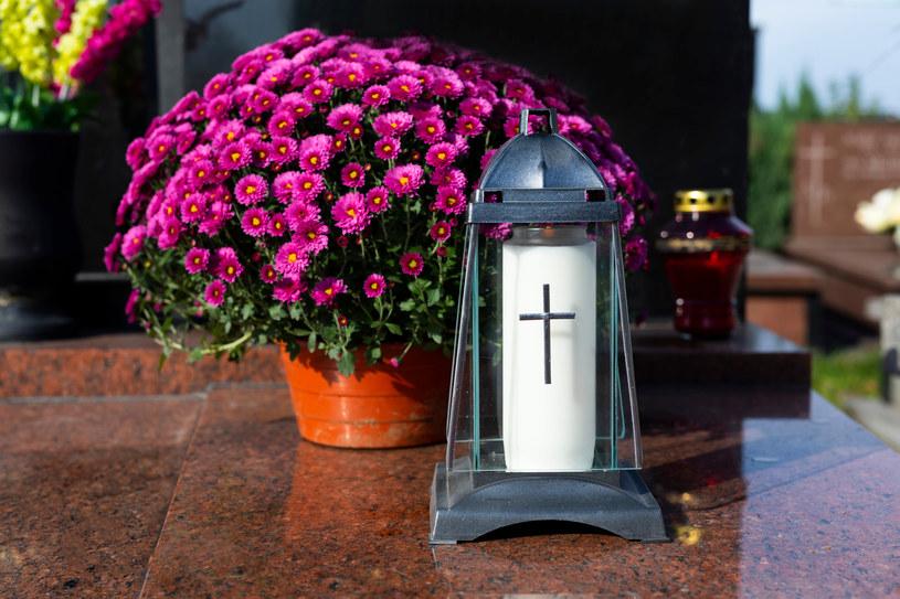 Kwiatom na grób należy zapewnić odpowiednią wilgotność podłoża /123RF/PICSEL