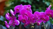 Kwiaty doniczkowe dla zapracowanych