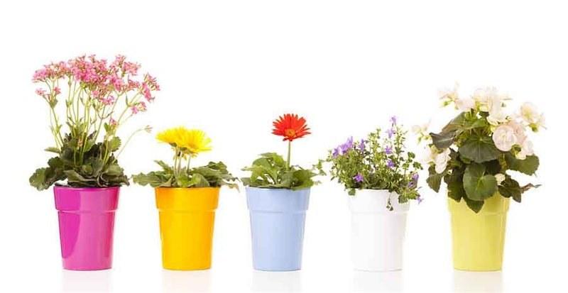 Kwiaty doniczkowe domowe /© Photogenica