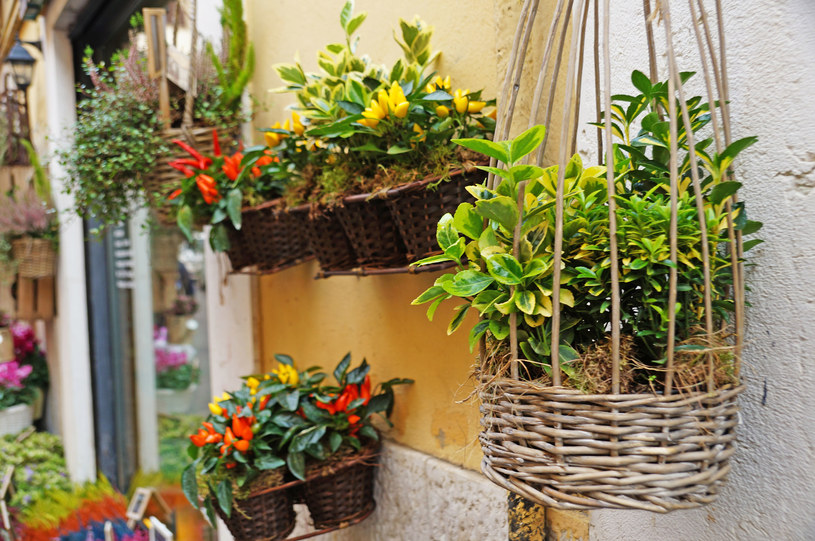 Kwiaty i liście więdną, żółkną i zaczynają się zwijać? Powód jest jeden /123RF/PICSEL