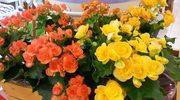 Kwiaty jadalne. Więcej niż ozdoba talerza
