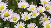 Kwiaty, które urozmaicą jadłospis