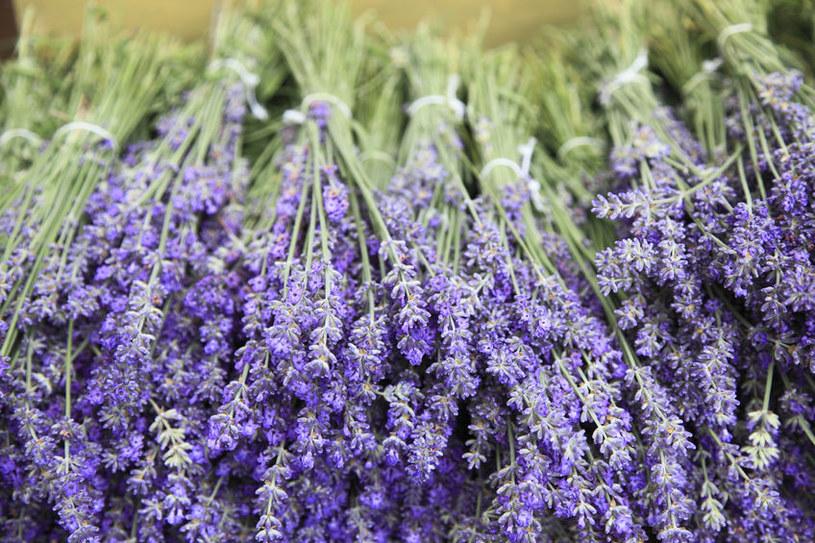 Kwiaty lawendy /©123RF/PICSEL