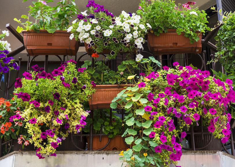 Kwiaty na balkon /©123RF/PICSEL