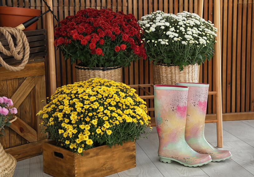 Kwiaty na cmentarz najlepiej wynieść tuż przed Zaduszkami, do tego czasu można przechowywać je w pomieszczeniach gospodarczych /123RF/PICSEL