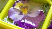 Kwiaty na talerzu. Jakie gatunki można bezpiecznie jeść?