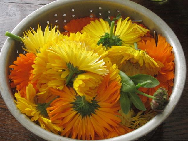kwiaty nagietka /© Photogenica