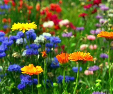 Kwiaty o właściwościach leczniczych