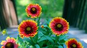 Kwiaty ogrodowe które długo postoją w wazonie