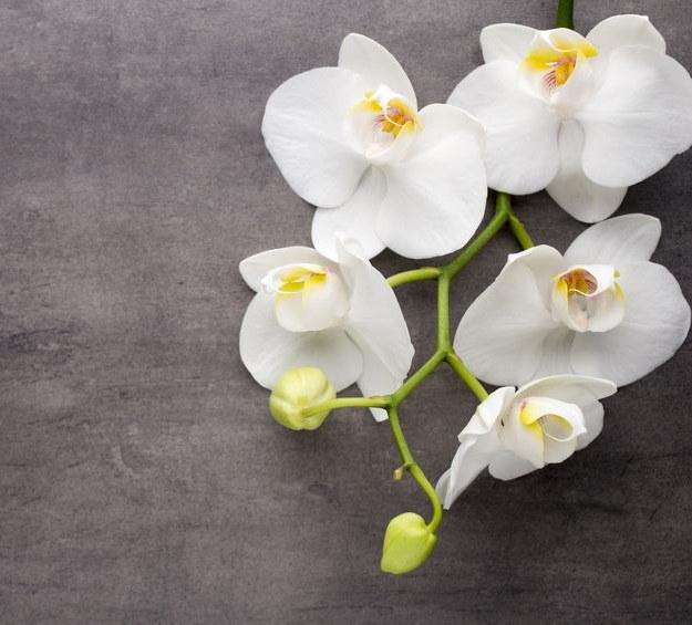 Kwiaty storczyka /©123RF/PICSEL