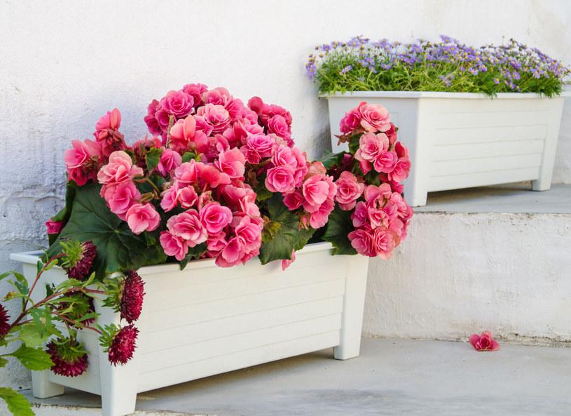 Kwiaty w donicach ozdobią nawet najbrzydszy balkon /Picsel /123RF/PICSEL