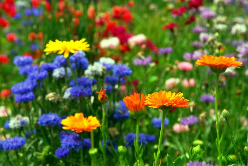kwiaty /© Photogenica
