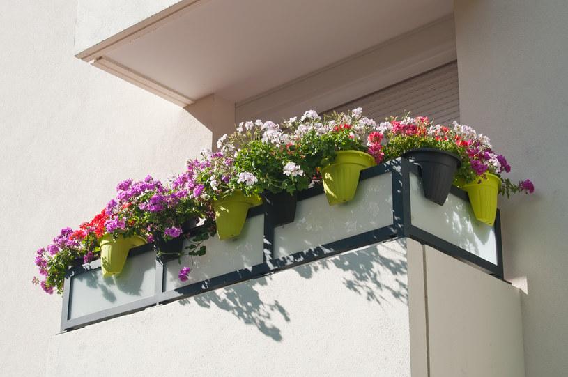 Kwietną łąkę możesz wyhodować na własnym balkonie! /123RF/PICSEL