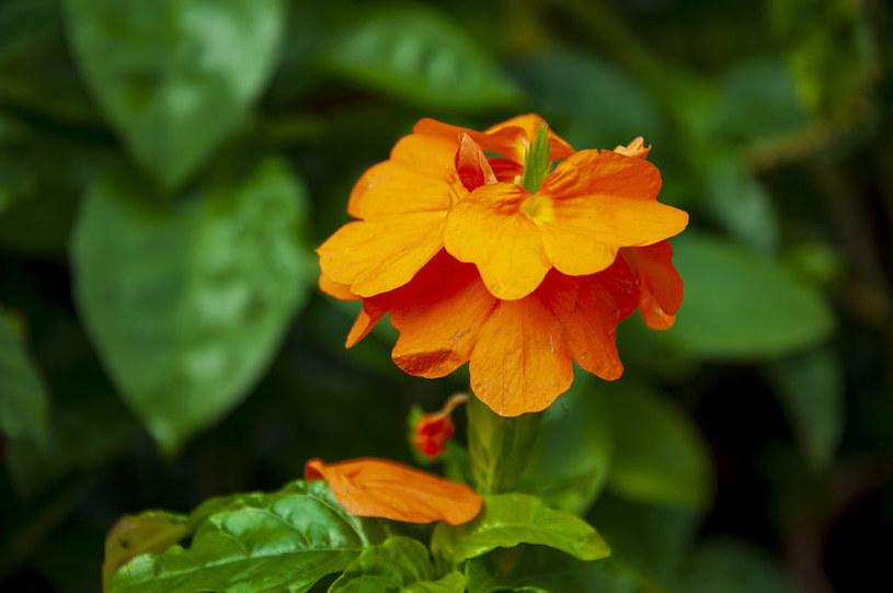 Kwitnąca roślina /©123RF/PICSEL