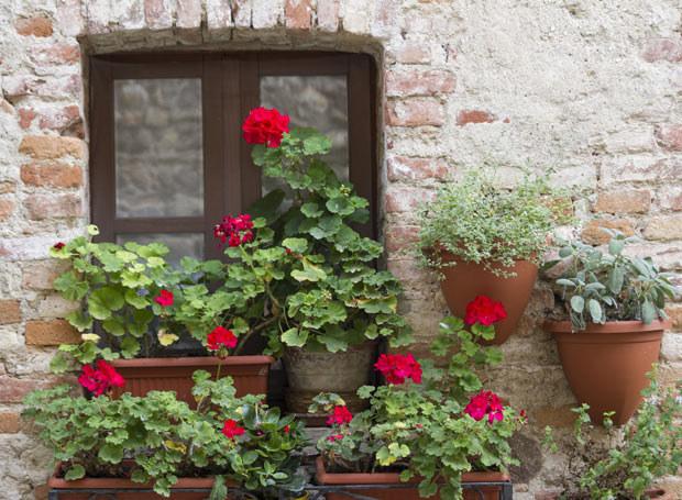 Kwitnące sadzonki róż można kupić przez cały sezon /Picsel /123RF/PICSEL